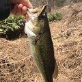 isanさんの山形県上山市での釣果写真