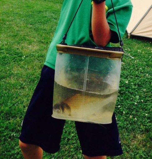 山崎さんの投稿画像,写っている魚はヘラブナ