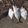 まいありーさんの鹿児島県日置市でのヒラメの釣果写真