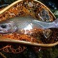 エンドウさんの熊本県上益城郡での釣果写真