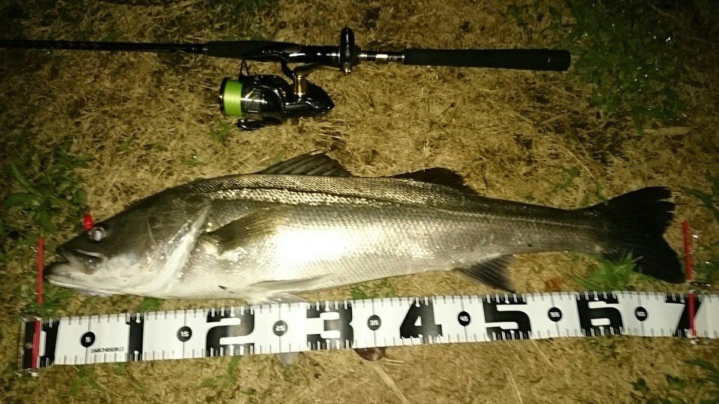 タケチンさんの投稿画像,写っている魚はスズキ