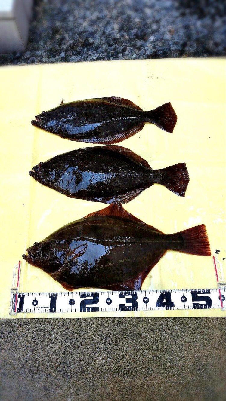 高橋幹博さんの投稿画像,写っている魚はヒラメ