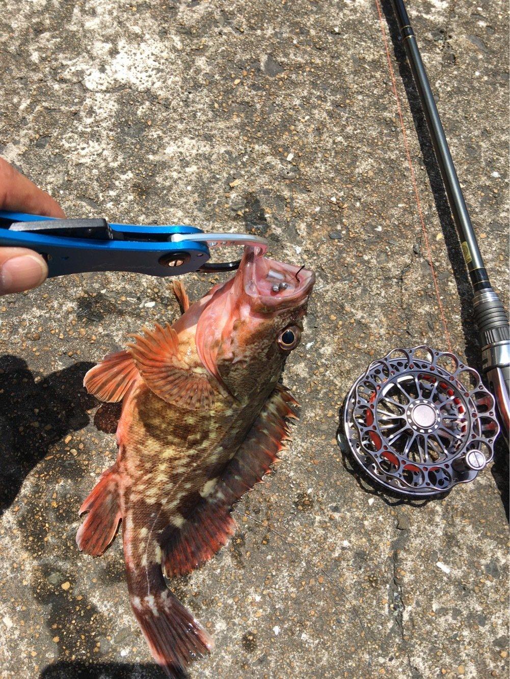 よんすさんの投稿画像,写っている魚はカサゴ