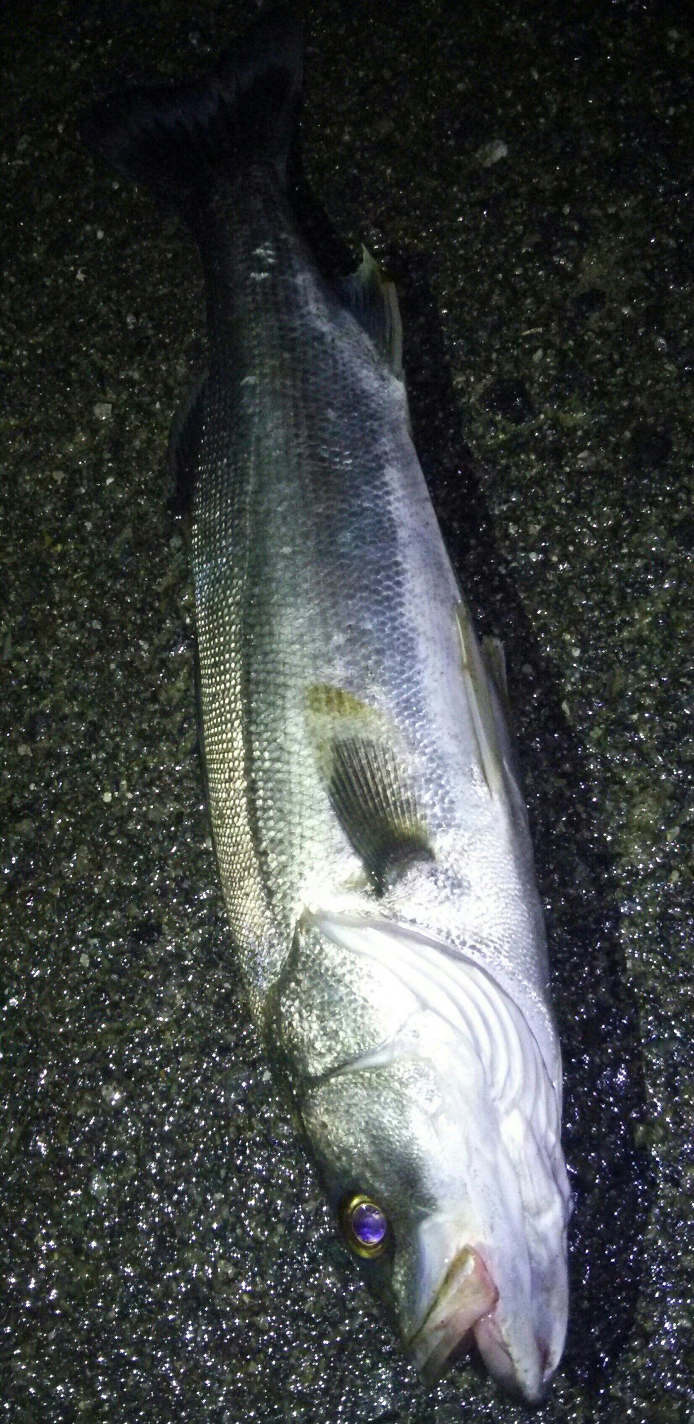 田村 雄さんの投稿画像,写っている魚は