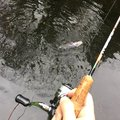 Yukiさんの山梨県南巨摩郡での釣果写真