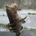 Awawaさんの鹿児島県曽於市での釣果写真