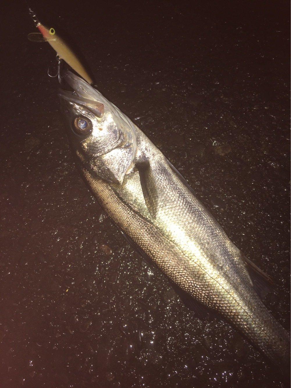 しょう☆さんの投稿画像,写っている魚は