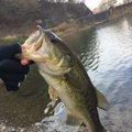 政鷹さんの山梨県西八代郡での釣果写真