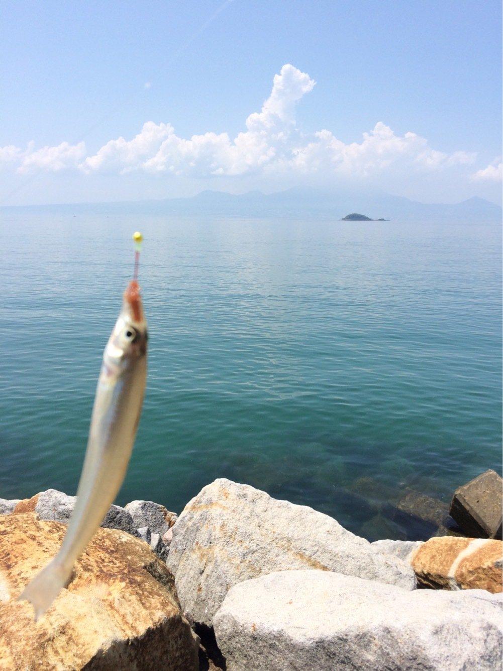 こうたさんの投稿画像,写っている魚はシロギス
