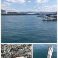 なかきさんの静岡県沼津市でのムツの釣果写真