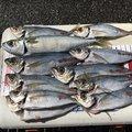ふみやさんの香川県小豆郡での釣果写真