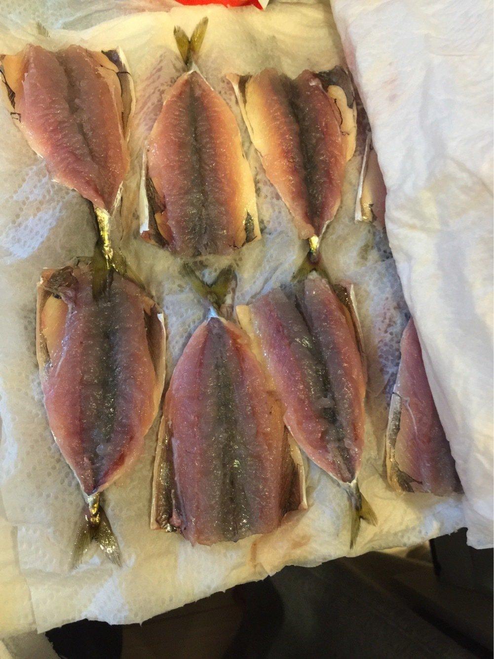 trumpeterhiro さんの投稿画像,写っている魚はゴマサバ