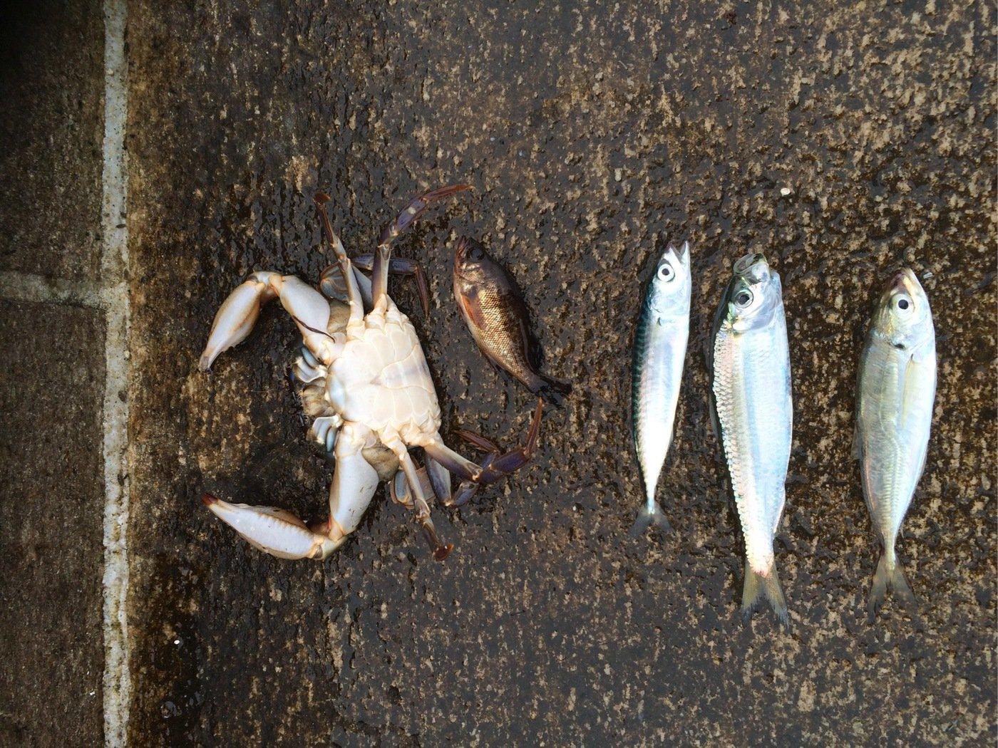 勝さんの投稿画像,写っている魚は