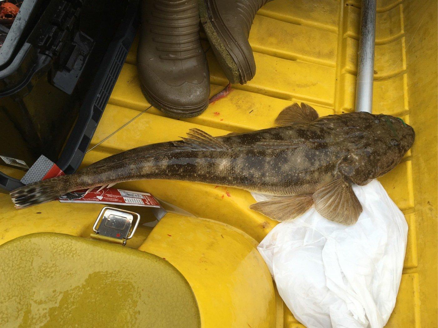 松KINGさんの投稿画像,写っている魚は