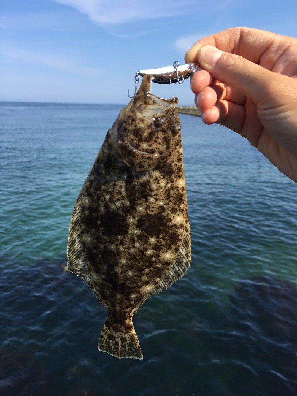 浜焼きさん太郎さんの投稿画像,写っている魚はヒラメ