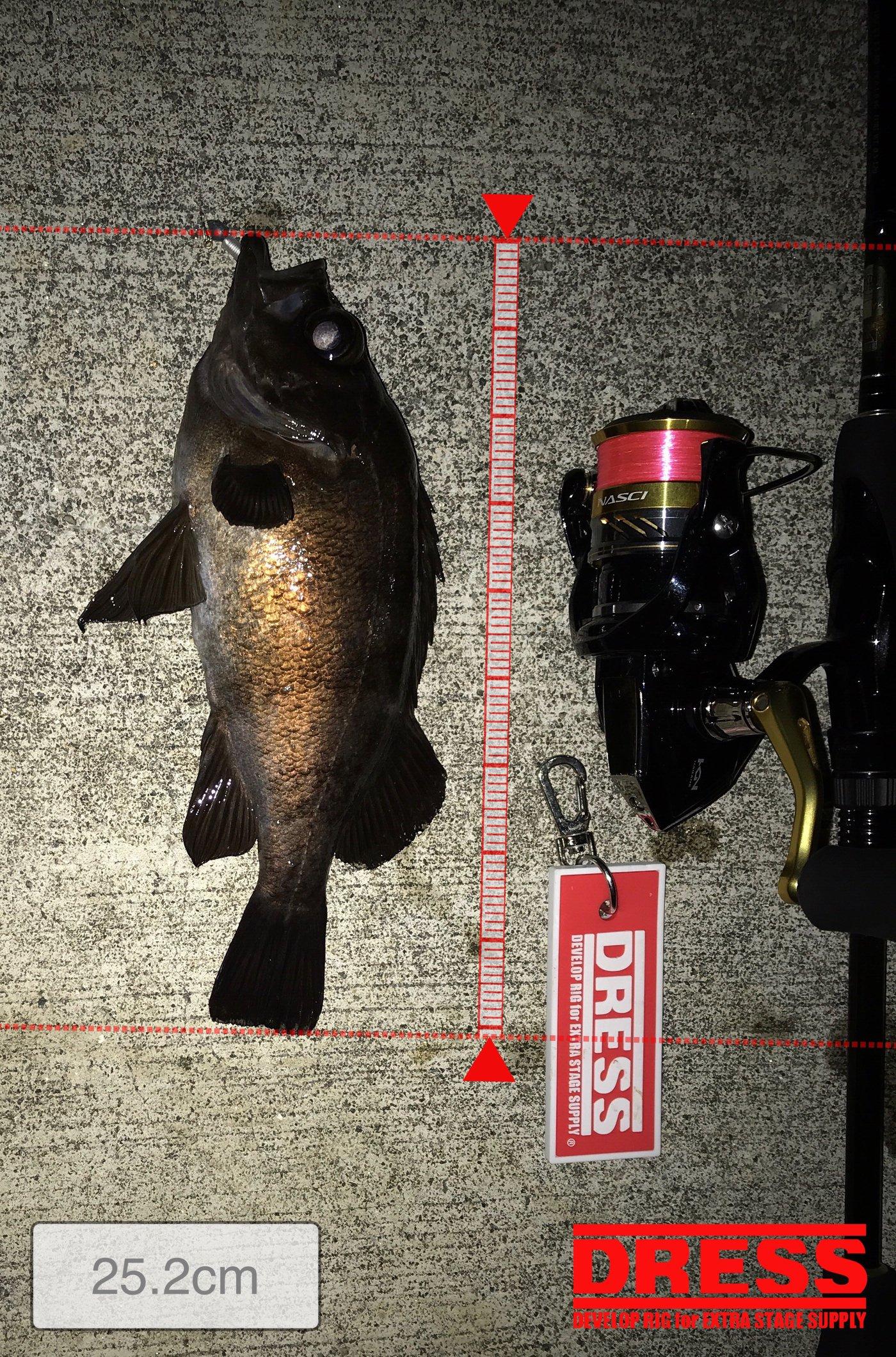 ナブラ太郎さんの投稿画像,写っている魚はメバル
