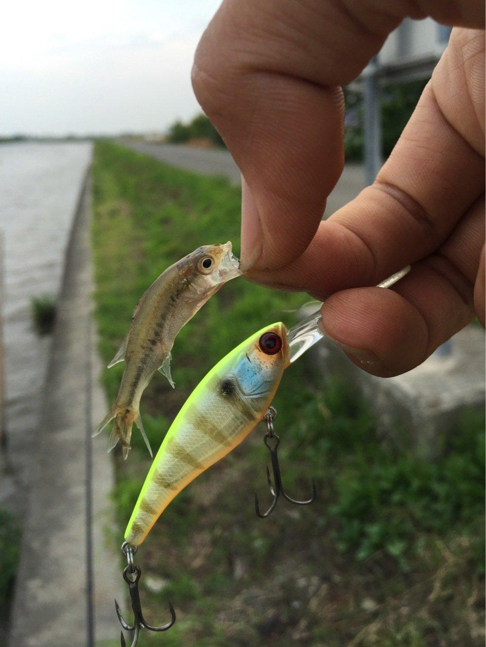 ひとしさんの投稿画像,写っている魚はブラックバス