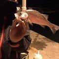 けちゃさんの千葉県鴨川市でのスズキの釣果写真