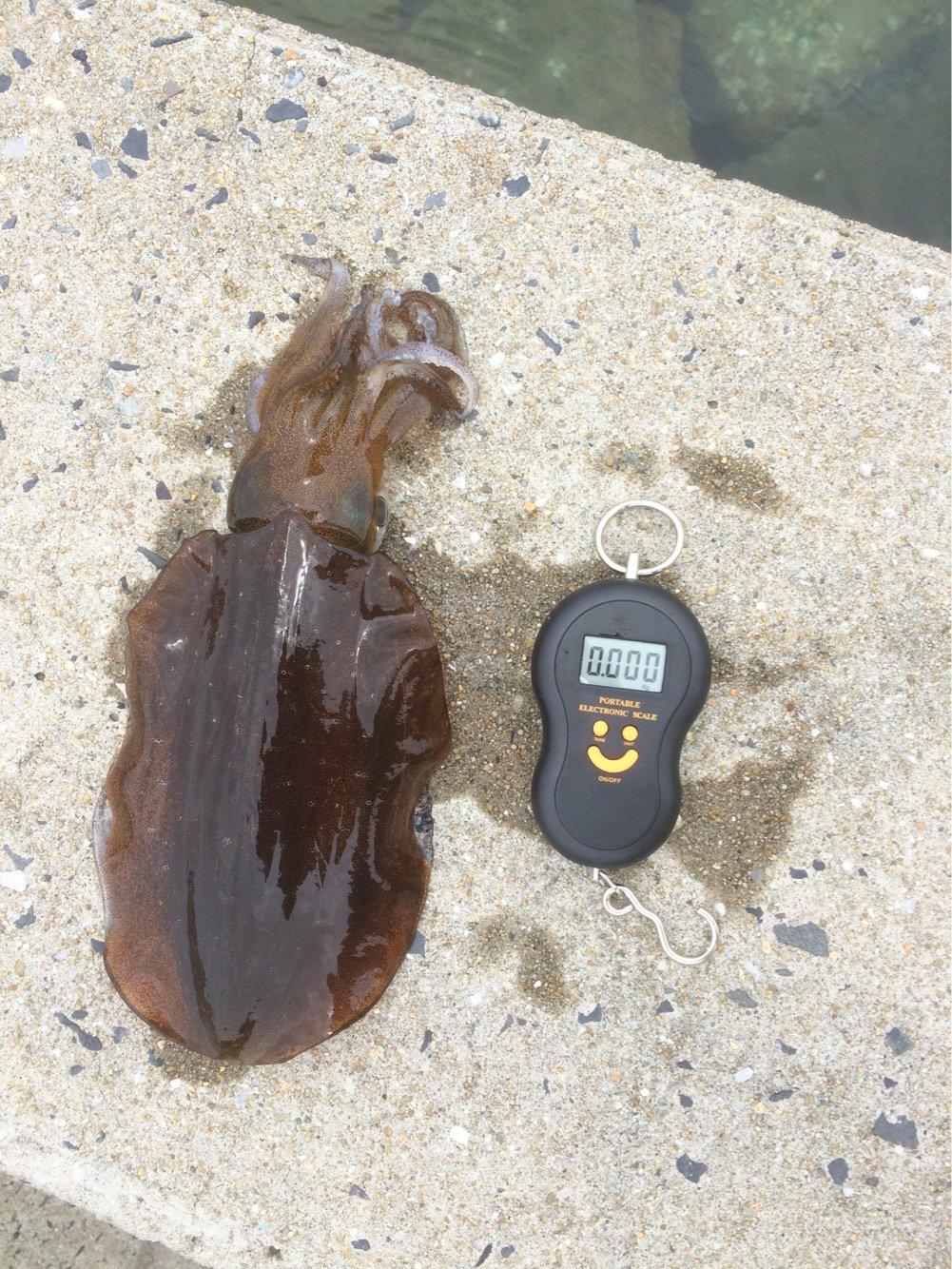 マツタケさんの投稿画像,写っている魚はアオリイカ