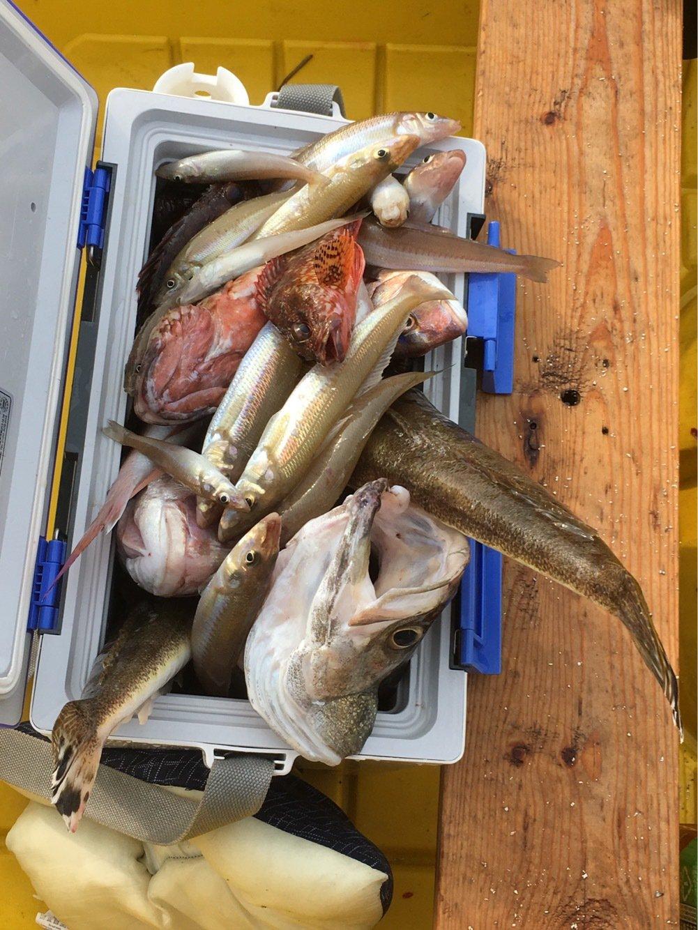 松KINGさんの投稿画像,写っている魚はマダイ