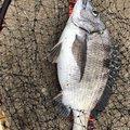 まなぶさんの鳥取県米子市での釣果写真