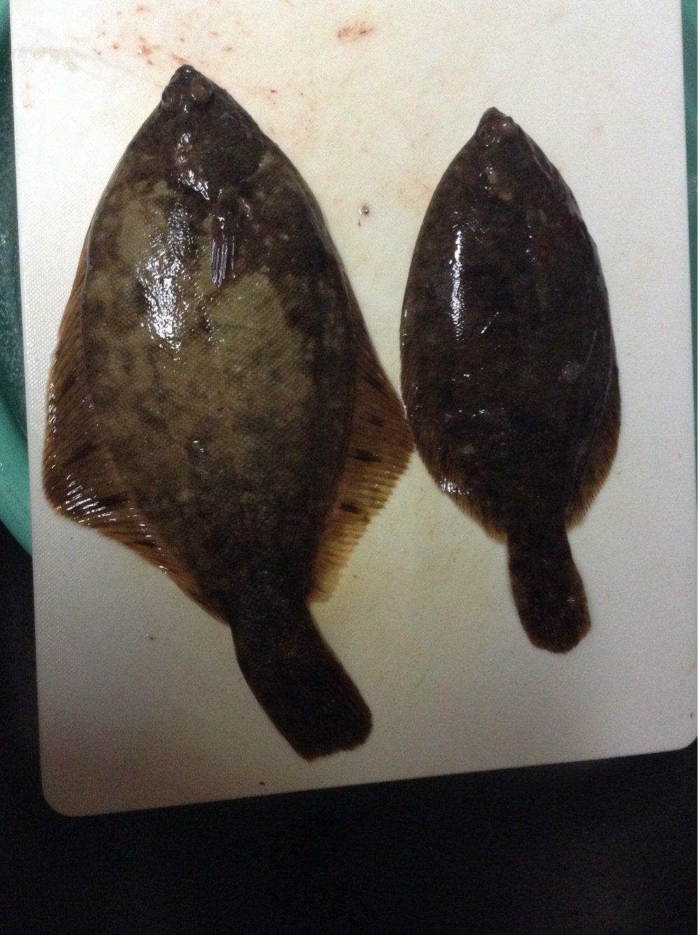 hirorinto0817さんの投稿画像,写っている魚はカレイ