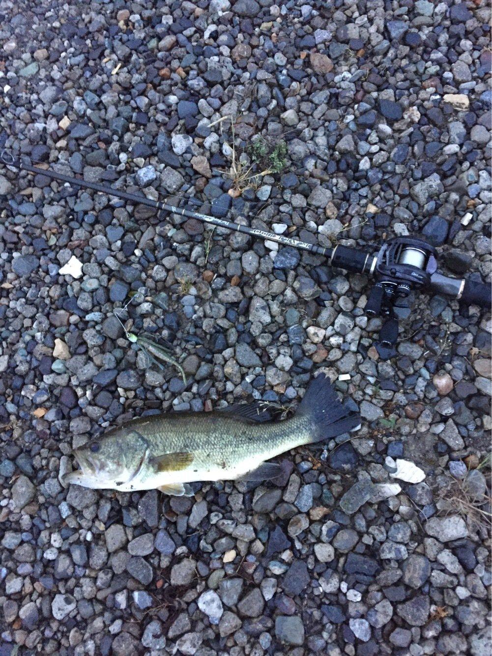 illさんの投稿画像,写っている魚はブラックバス
