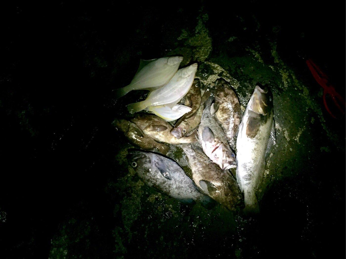 makashiさんの投稿画像,写っている魚はアイナメ