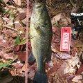 ポンジさんの愛知県瀬戸市での釣果写真