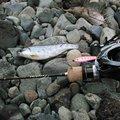 平野 健太さんの和歌山県有田郡での釣果写真