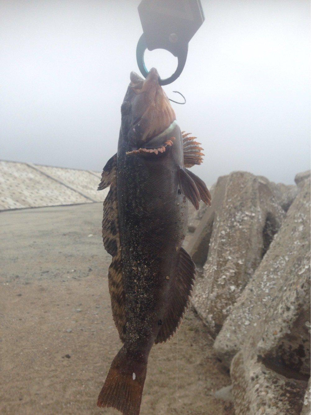へたっぴ三ちゃんさんの投稿画像,写っている魚はアイナメ
