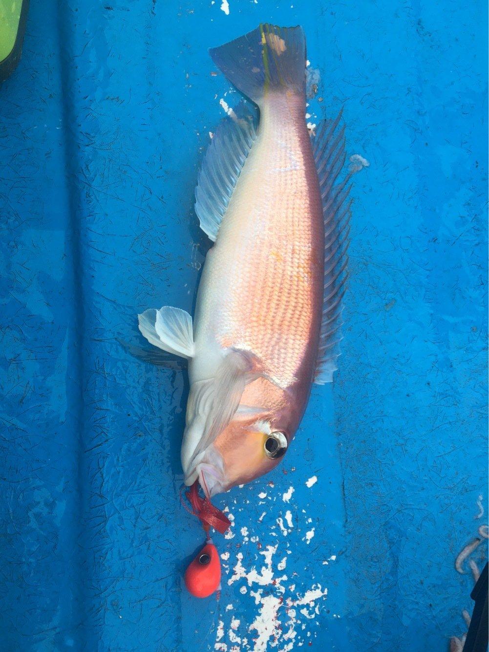 team esoさんの投稿画像,写っている魚はアマダイ