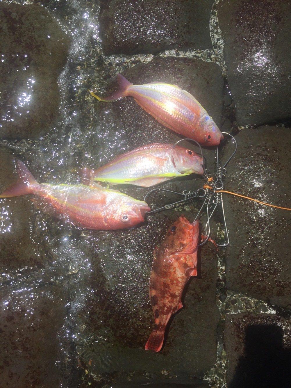 KIM2さんの投稿画像,写っている魚はイトヨリダイ