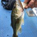 ぐんぐんぐるとさんの茨城県行方市での釣果写真