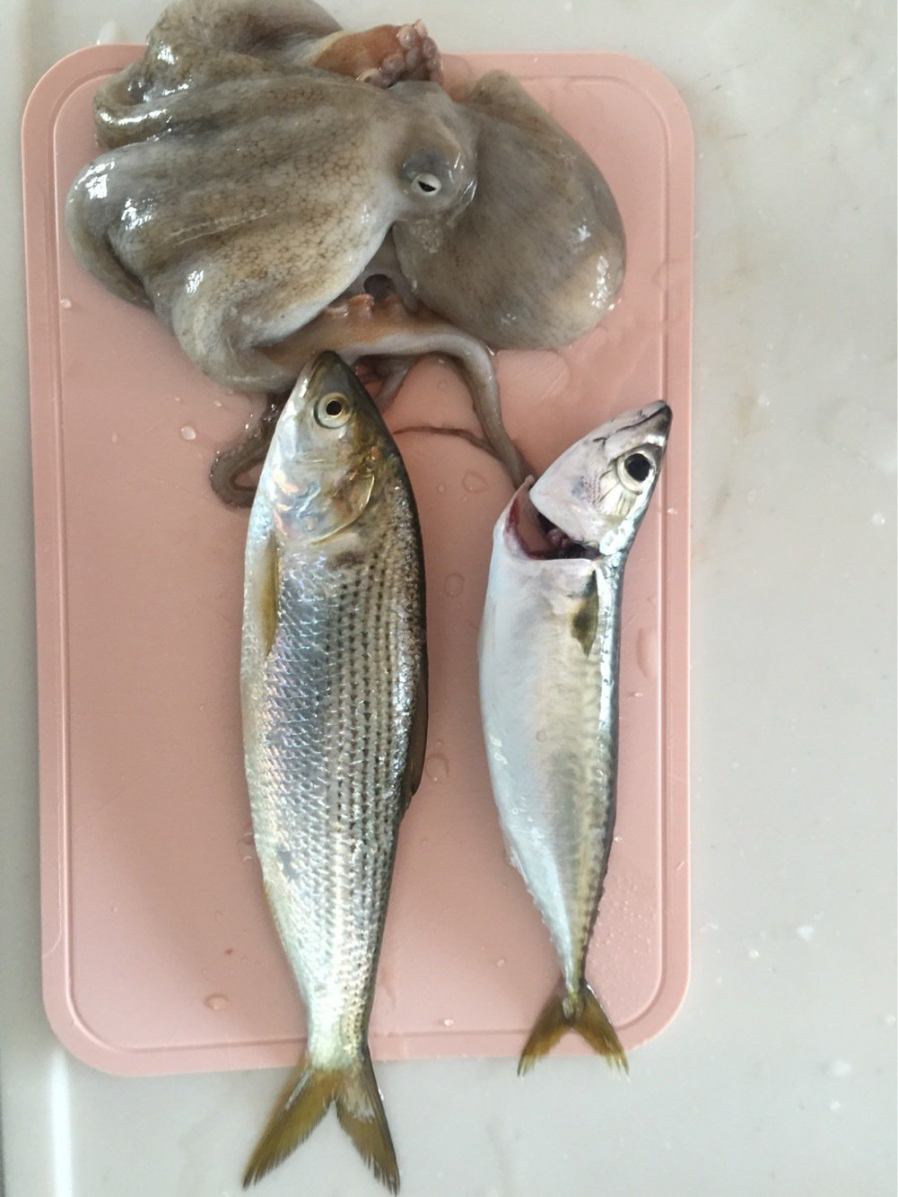 Hutさんの投稿画像,写っている魚は