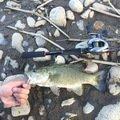 たかひろさんの山形県寒河江市でのスモールマウスバスの釣果写真