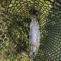 やきとりマスさんの栃木県小山市での釣果写真