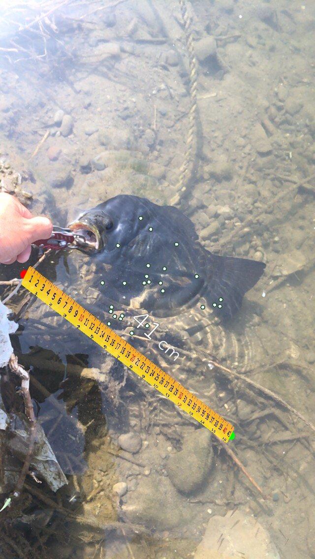 シマックさんの投稿画像,写っている魚はスモールマウスバス