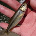 天然居士さんの兵庫県神崎郡での釣果写真