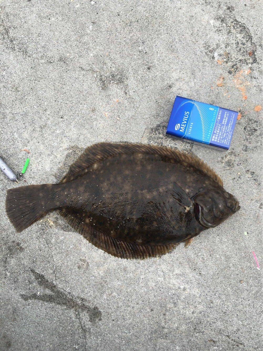 釣り2年目突入さんの投稿画像,写っている魚はマコガレイ