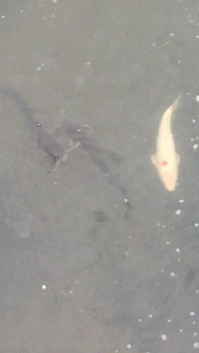 まぁーさんさんの投稿画像,写っている魚は