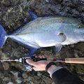 スズキリさんのカスミアジの釣果写真