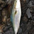 まーさんの鹿児島県肝属郡での釣果写真