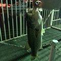 雅洋さんの大阪府大東市での釣果写真