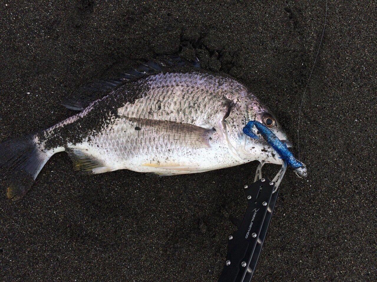 カトちゃんさんの投稿画像,写っている魚は