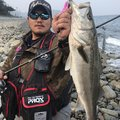 タツヨシさんの青森県青森市でのアイナメの釣果写真