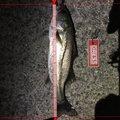 akakage さんの長野県安曇野市での釣果写真