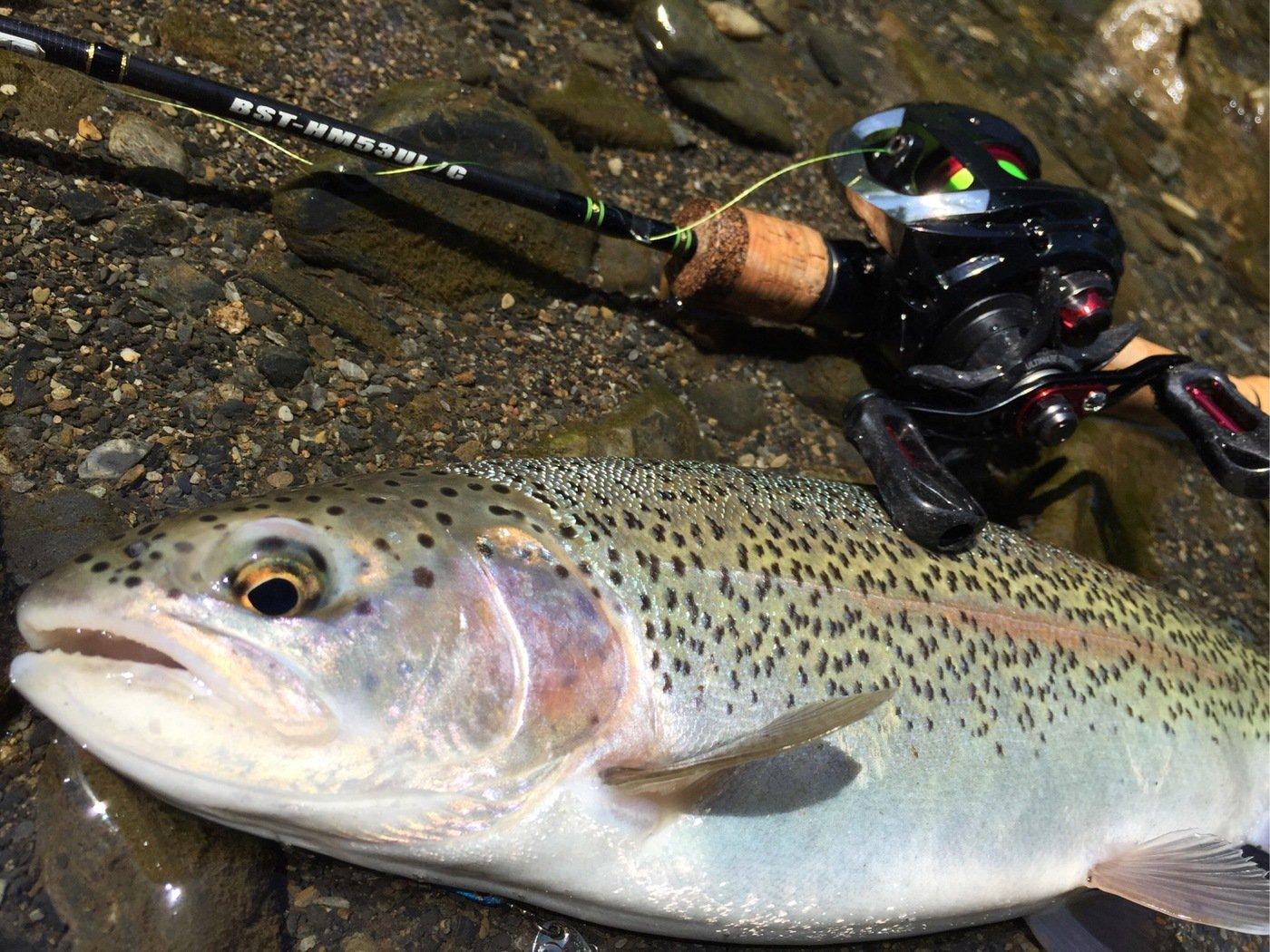 impedanceさんの投稿画像,写っている魚はニジマス