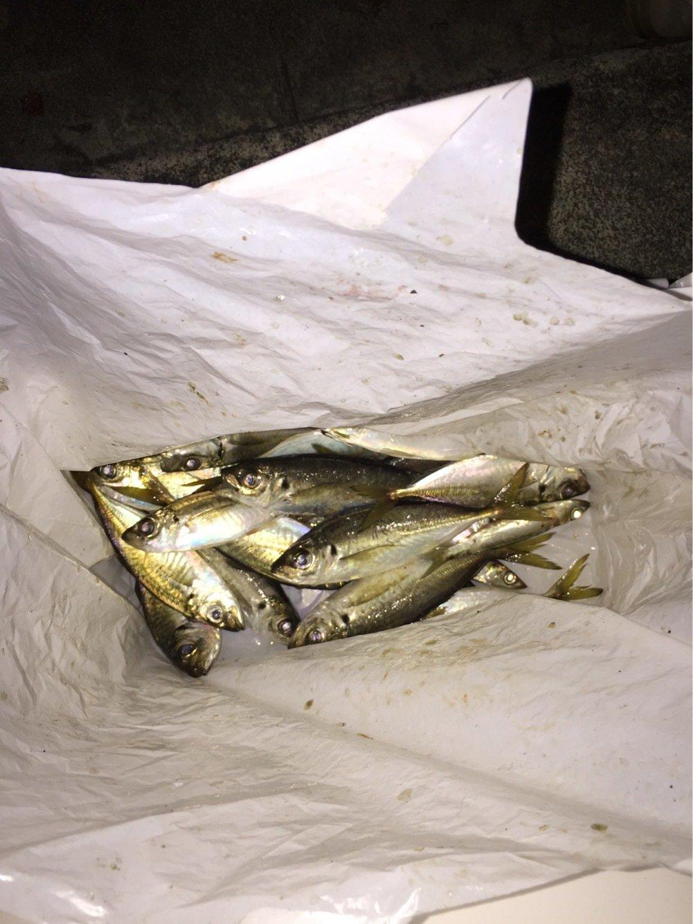 trumpeterhiro さんの投稿画像,写っている魚はアジ