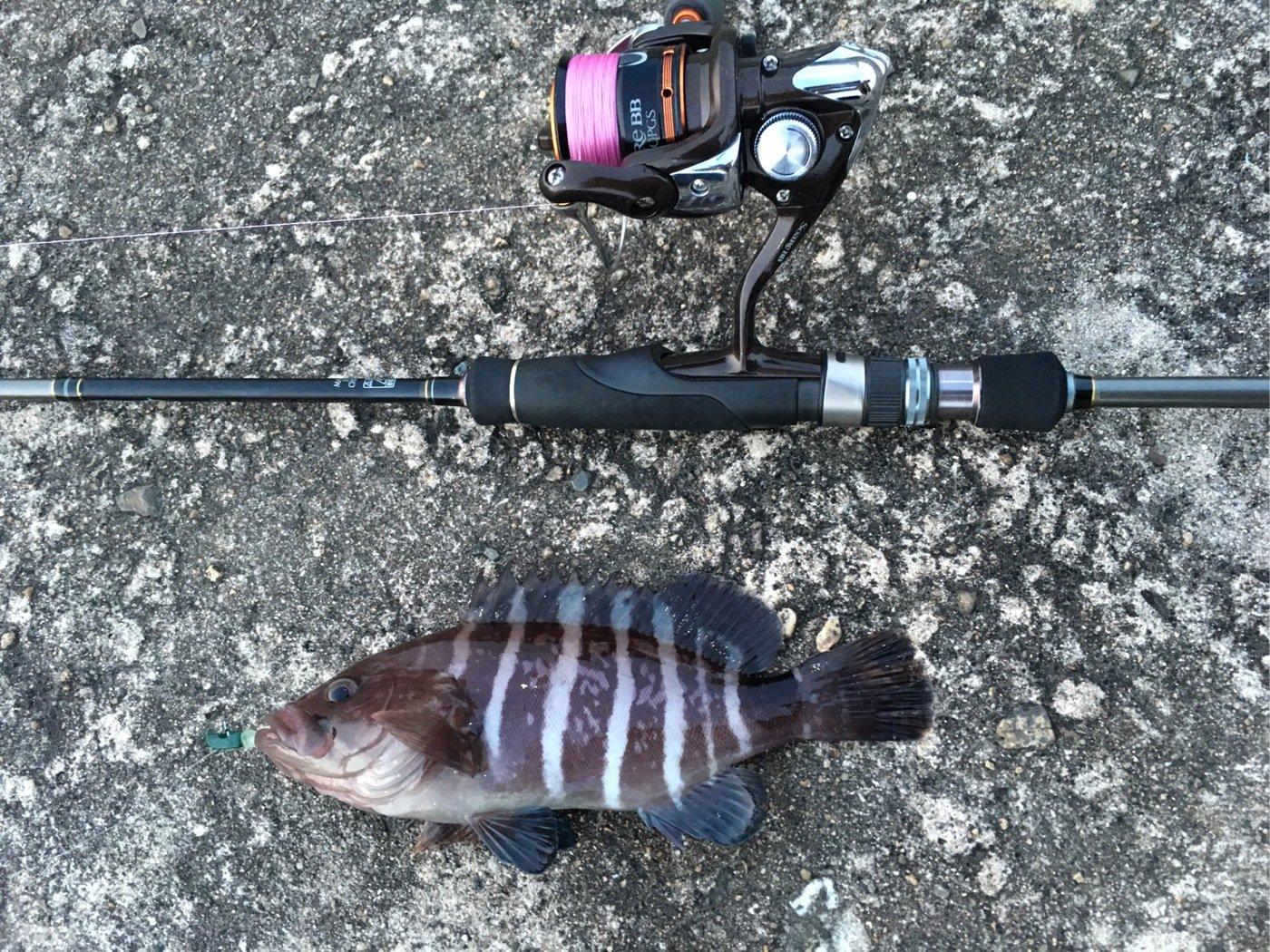 大五郎さんの投稿画像,写っている魚はマハタ